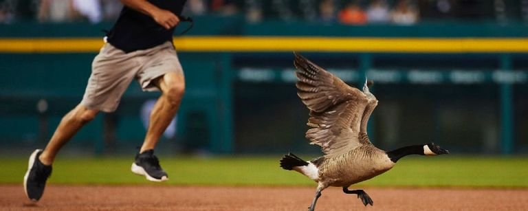 'Rally Goose' set free after stay in veterinary hospital